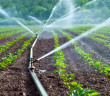 Irrigation-groundwater