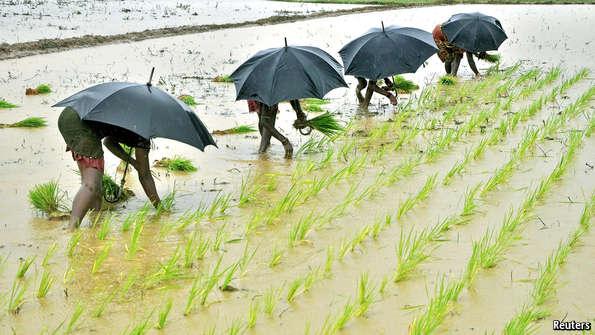 rainfall_iirgation